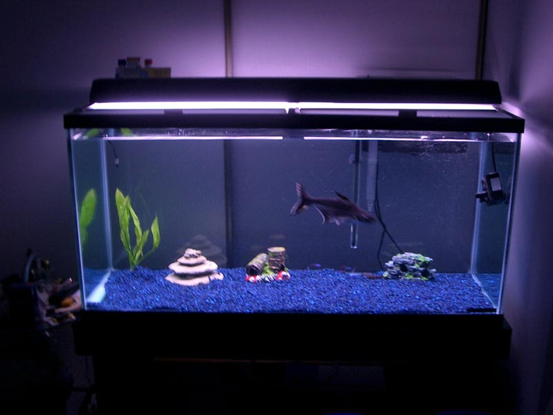 concept design home home aquarium sharks photos